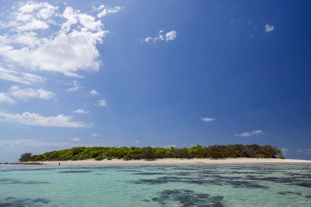 heron island cover_1