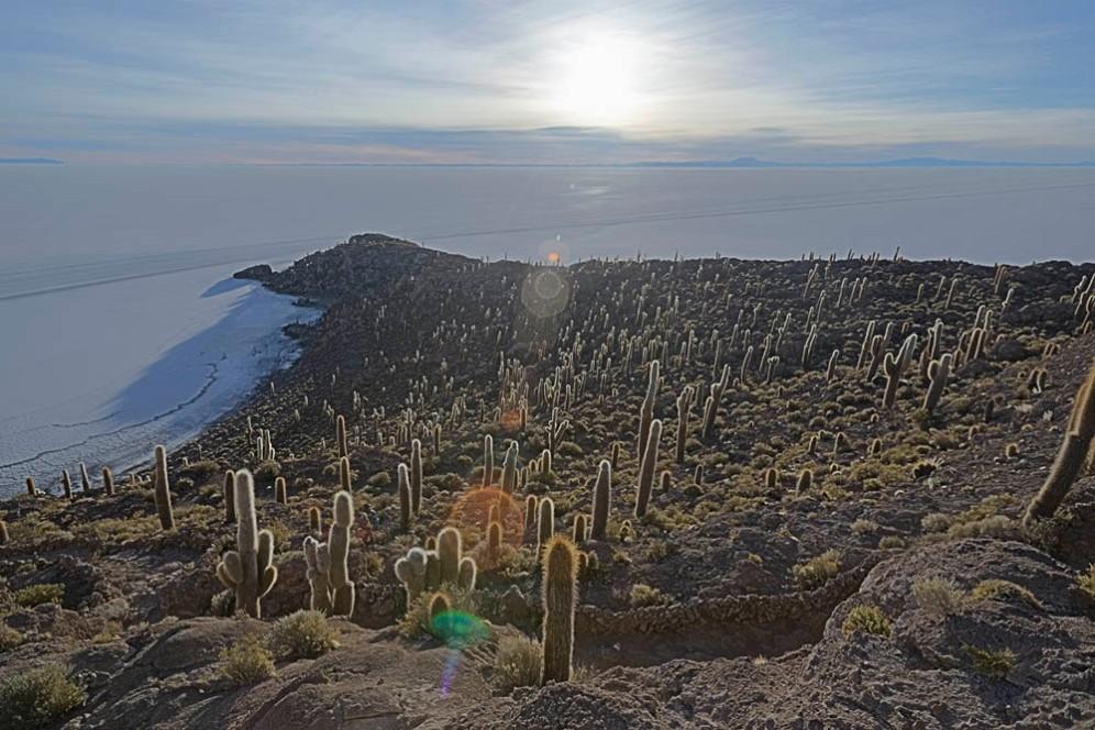 cactus island utuni