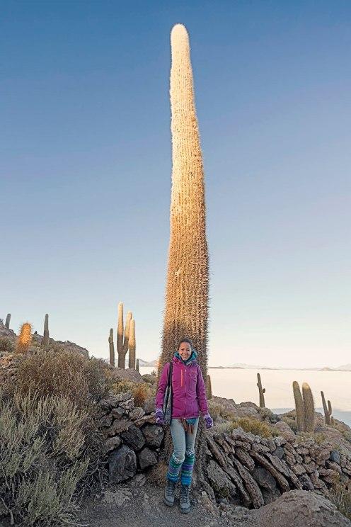 Tamar Cactus